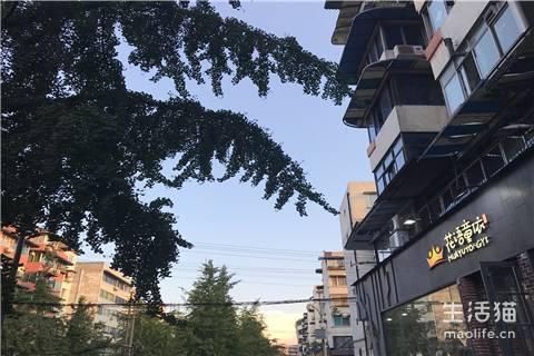 2020成都集体户买房需要什么条件包括什么